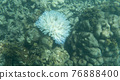 View of coral bleaching 76888400