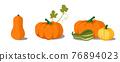 Pumpkin set vector 76894023