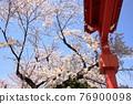 cherry blossom, cherry tree, spring 76900098