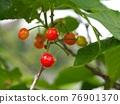 cherry, fruit, fruits 76901370