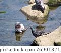 bird, birds, fowls 76901821