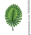 Tropical abstract green isolated leaves. Botanical element for marketing cosmetics spa or beauty care products. Leaf of exotic plant 76904495