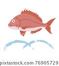鯛魚圖 76905729