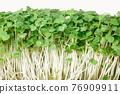 microgreen arugula isolated on white background close-up. horizontal 76909911