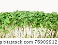 Vitamin microgreen arugula isolated on white background close-up. horizontal 76909912