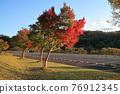楓樹 紅楓 楓葉 76912345