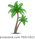 Tropical palm tree with coconuts 76913922