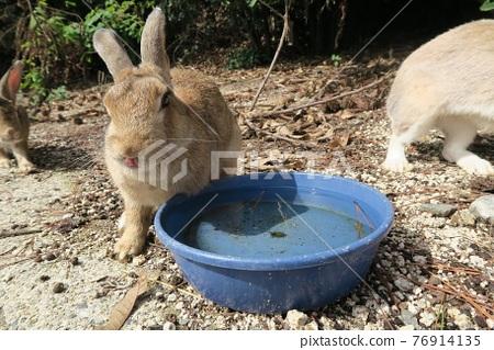 奧之島的好朋友兔 76914135