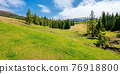 spruce trees on the grassy pasture. snow capped ridge in the distance. beautiful countryside rural landscape on a sunny day 76918800