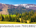 mountainous countryside in spring. rural fields and pastures in green grass. spruce forest on the rolling hills. distant alpine meadows of borzhava ridge in snow. sunny day in carpathians, ukraine 76918802