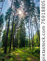 mixed forest on the sunny summer day. grassy ground in dappled light. freshness of the carpathian woods 76918805