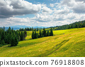spruce trees in mountains. summer countryside landscape with grass on the hills. nature scenery on a sunny day with clouds on the sky. environment conservation concept 76918808