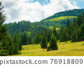 coniferous forests in mountains. summer landscape with green grass on the hills. nature scenery on a sunny day with clouds on the sky 76918809