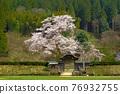 cherry blossom, cherry tree, chinese-style gate 76932755