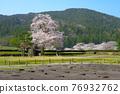 cherry blossom, cherry tree, chinese-style gate 76932762