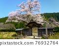 cherry blossom, cherry tree, chinese-style gate 76932764