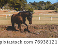 Black horse in the muddy of the farm. 76938121