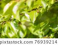 翠綠 鮮綠 葉子 76939214