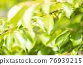 翠綠 鮮綠 葉子 76939215