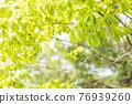 翠綠 鮮綠 葉子 76939260