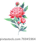 Garden peony. Watercolor style, hand painted illustration 76945964