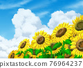 Sunflowers and Ice clouds 76964237