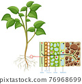 Diagram showing root cell of plant isolated on white background 76968699