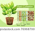 Diagram showing Plant Cohesion 76968700