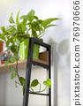 인테리어식물 76970666