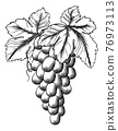 Bunch of Grapes on Grape Vine and Leaves 76973113