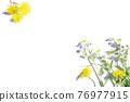 bloom, blossom, blossoms 76977915