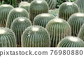 Green plant and white cactus natural decoration in the greenhouse 76980880