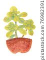 室內盆栽 觀葉植物 景天屬植物 76982391