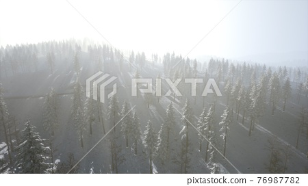 Aerial view of forest during cold winter morning 76987782