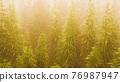 plantation of cannabis in deep fog 76987947