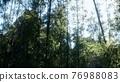 Windy Tranquil Arashiyama Bamboo Grove 76988083