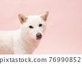 dog, dogs, animal 76990852