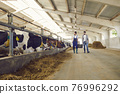 Young men farmers or farm workers walking along stalls and carrying hay for feeding cows 76996292