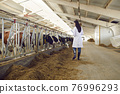 View from the back of a veterinarian conducting regular inspections of cattle on a dairy farm. 76996293