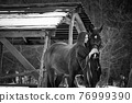 Beautiful girl hugs a horse near wooden buildings on a winter day, black and white photography 76999390