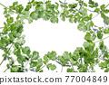 cilantro, foliage, leaf 77004849