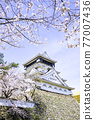 奧古拉城堡是一個美麗的櫻花觀賞時期 77007436