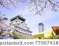 盛開的美麗的小倉城堡 77007438