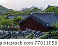 계룡산 갑사의 봄 77011059