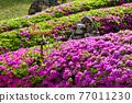 春天 杜鵑花 花 77011230