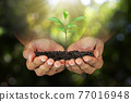Hands holding sprout on blurred green nature bokeh background, environmental concept 77016948