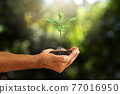 Hands holding sprout on blurred green nature bokeh background, environmental concept 77016950