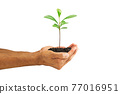Hands holding green sprout isolated on white background with clipping path, environmental concept 77016951