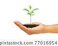 Hand holding green sprout isolated on white background with clipping path, environmental concept 77016954