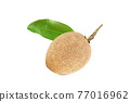 One fresh sapodilla with leaves on white background with clipping path 77016962